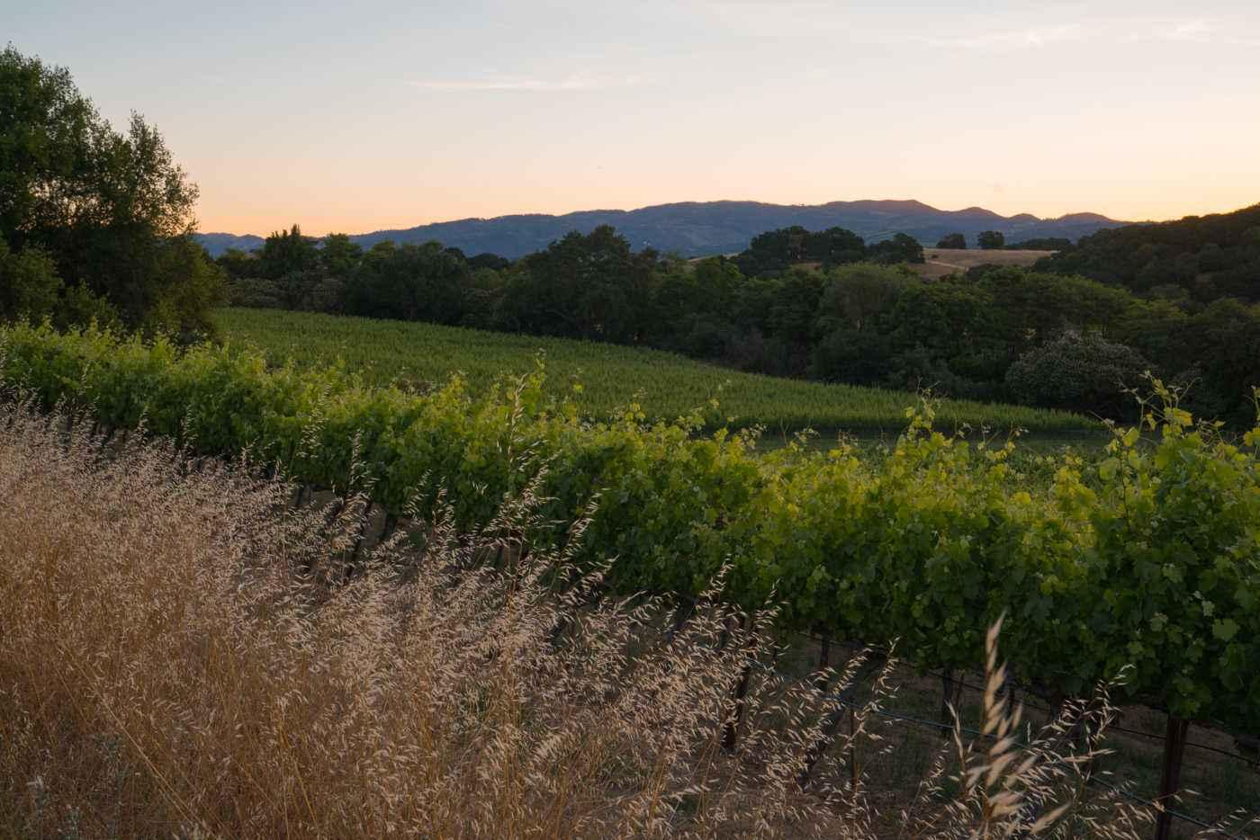 field + vineyard